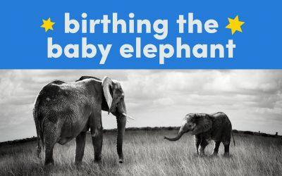 Birthing The Baby Elephant